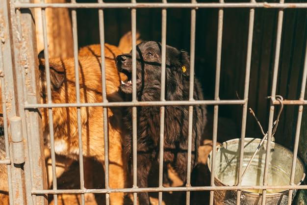 Foto von zwei hunden in einem tierheim hinter den gittern.