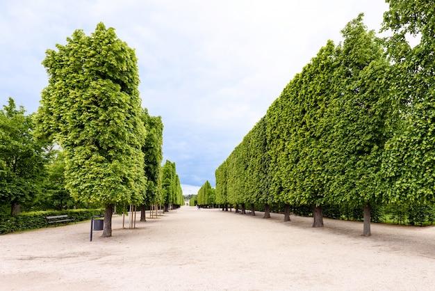 Fotoansicht von berühmten grünen bäumen bei schönbrunn