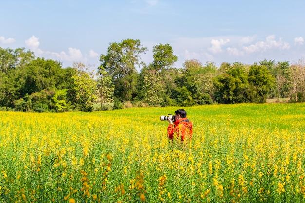 Fotograf machen ein foto am schönen gelben feld der blumen sunhemp (crotalaria) am shunshine tag, thailand