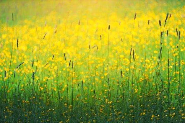 Fotografie des gelben blütenblumenfeldes