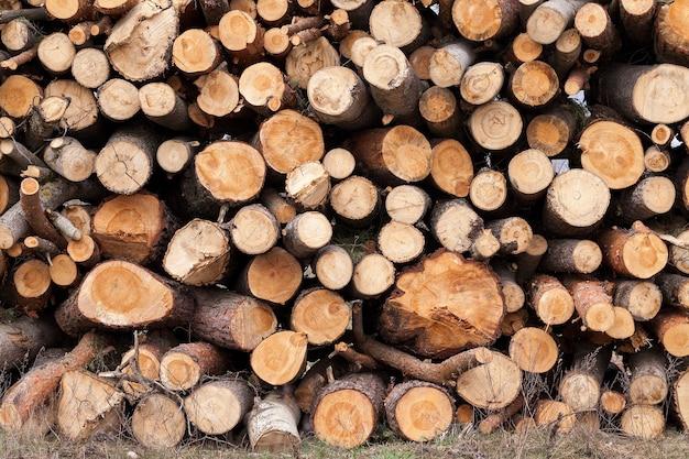 Fotografierte aus der nähe gefällte bäume, die während des holzeinschlags zusammengesetzt wurden