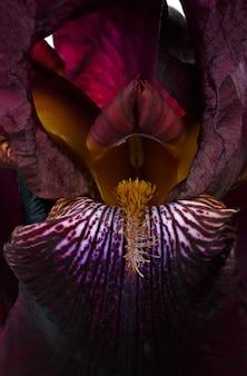 Fotografierte makroblume iris