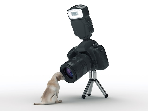 Fotokamera und hund