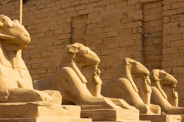 Fragment der gasse der sphinxe im karnak-tempel, luxor, ägypten.