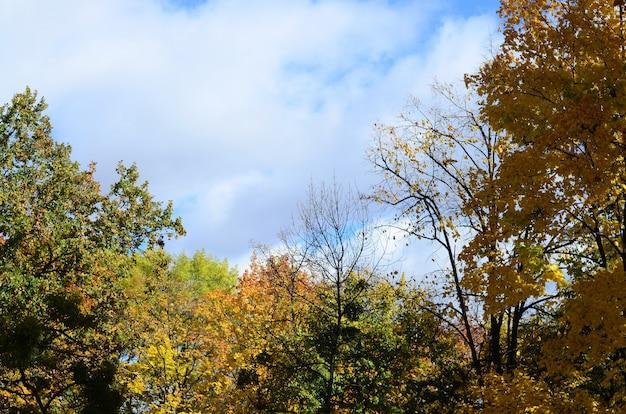 Fragment von bäumen, deren blätter in der herbstsaison ihre farbe ändern