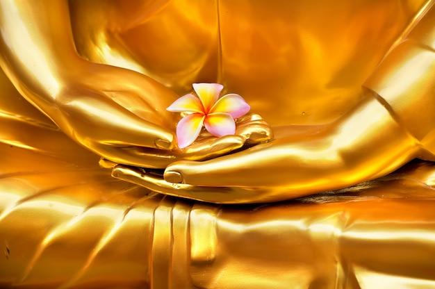 Frangipani in der hand von bildbuddha. hand der buddha-meditationsstatue am thailändischen tempel.