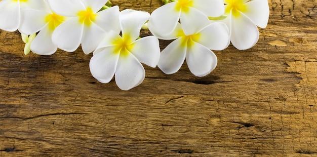 Frangipani, plumeria, frangipani