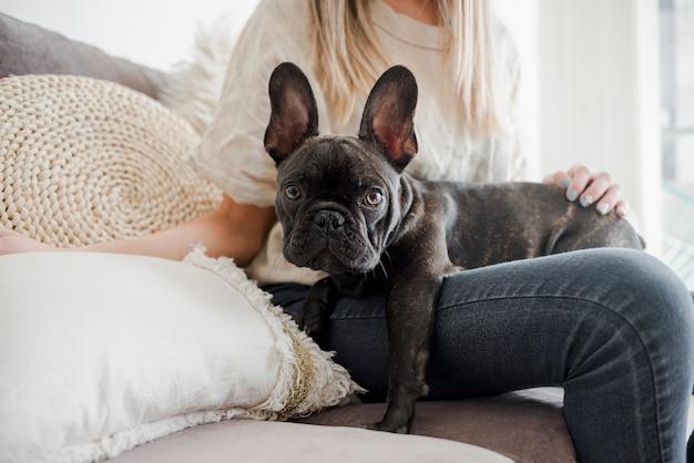 Französische bulldogge der vorderansicht, die kamera betrachtet