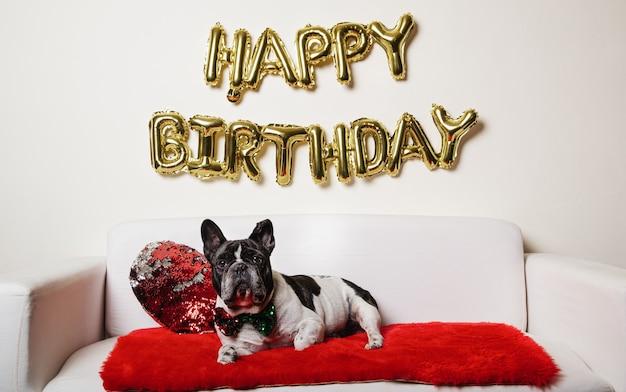 Französische bulldogge, die auf dem sofa mit alles gute zum geburtstagballons liegt. geburtstagshund