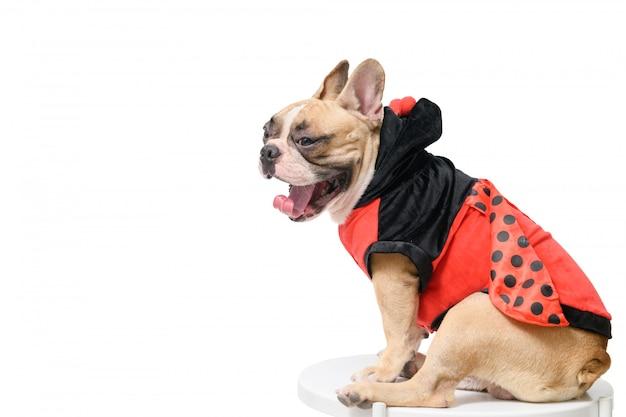 Französische bulldogge, die lustiges marienkäferkostüm trägt, das auf tisch gähnt