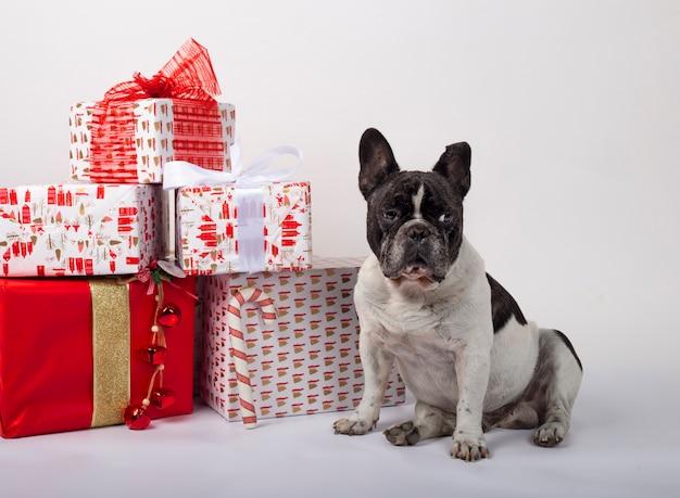 Französische bulldogge, die mit weihnachtsgeschenkboxen sitzt