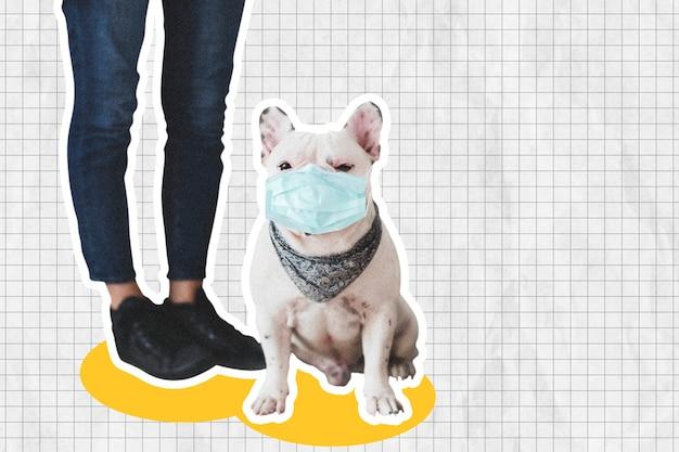 Französische bulldogge in gesichtsmaske soziale distanzierung mit collagen-designraum für gemischte medien