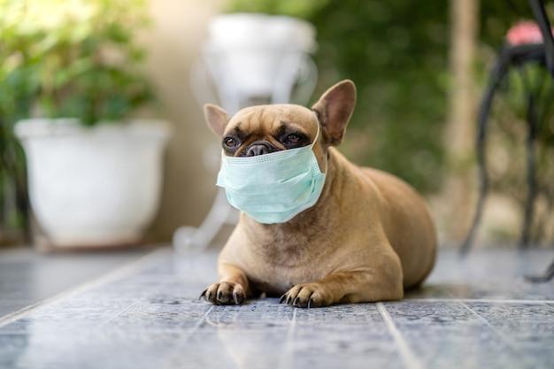 Französische bulldogge mit schützender gesichtsmaske im freien