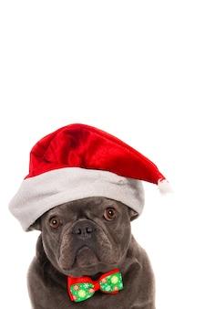 Französische bulldogge mit weihnachtsmütze und fliege. porträt