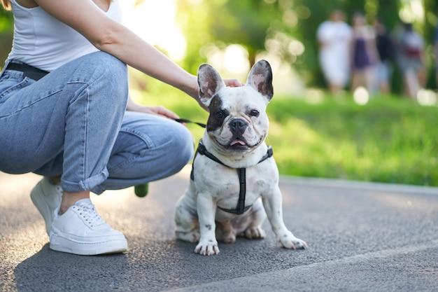 Französische bulldogge sitzt auf dem boden im park