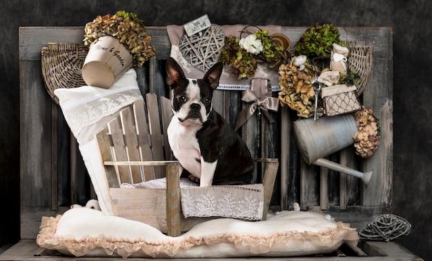 Französische bulldogge vor einer rustikalen wand