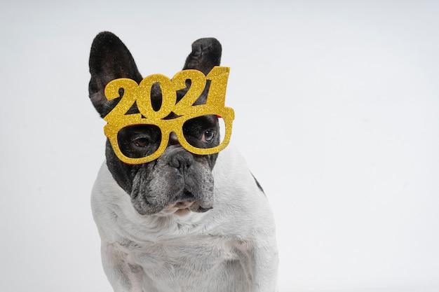 Französischer bulldoggenhund, der neues jahr 2021 mit textbrille feiert.