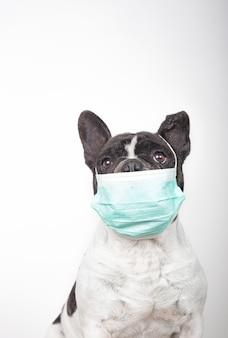 Französischer bulldoggenhund mit medizinischer maske mit kopienraum auf coronavirus-konzept des weißen hintergrunds