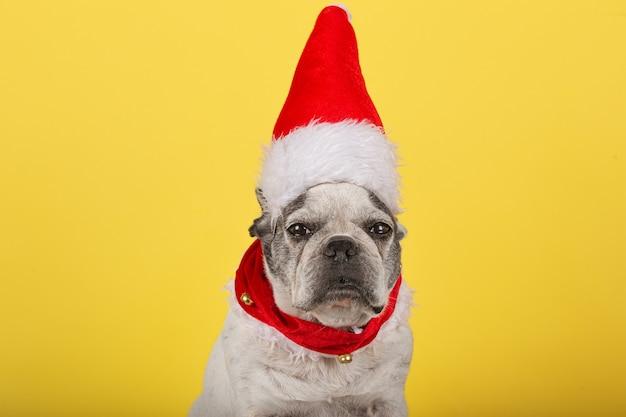 Französischer bulldoggenhund. weihnachtsmann. neujahr. weihnachten.