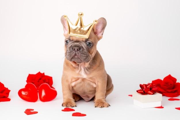 Französischer bulldoggenwelpe auf valentinstagherzenhintergrund