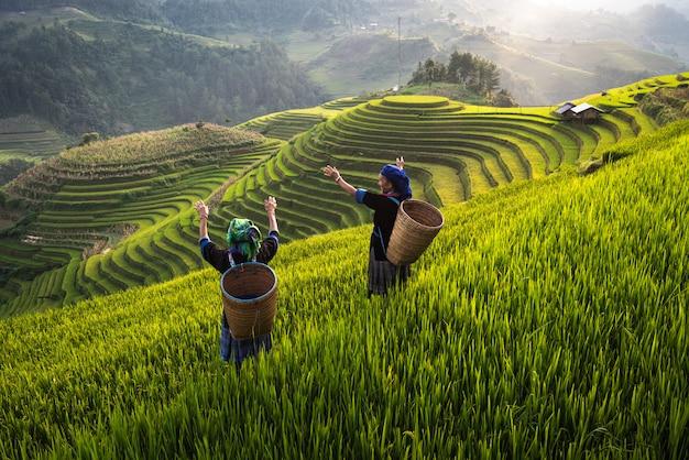 Frau auf terassenförmig angelegtem feld des reises in vietnam