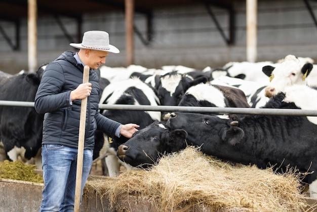 Frau bauer kümmert sich um kühe