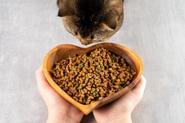 Frau bietet einer braunen katze eine schüssel futter, gesunde haustiere, gesundes futter an