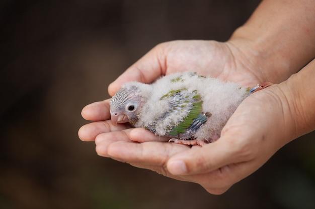 Frau, die an hand einen kleinen wellensittichvogel hält und mach's gut mit leichtem