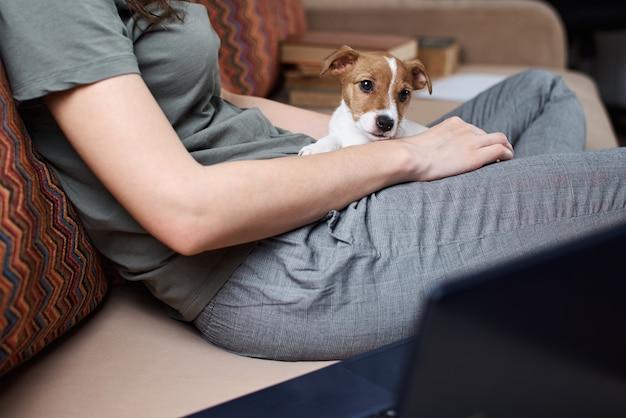 Frau, die an laptop-computer und jack russell terrier hündchen auf sofa arbeitet. fernarbeit von zu hause aus konzept. gute beziehungen zu haustieren