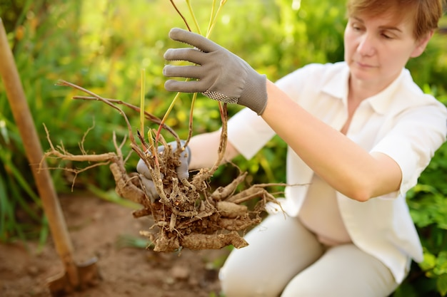 Frau, die anlage im hausgarten wieder pflanzt.