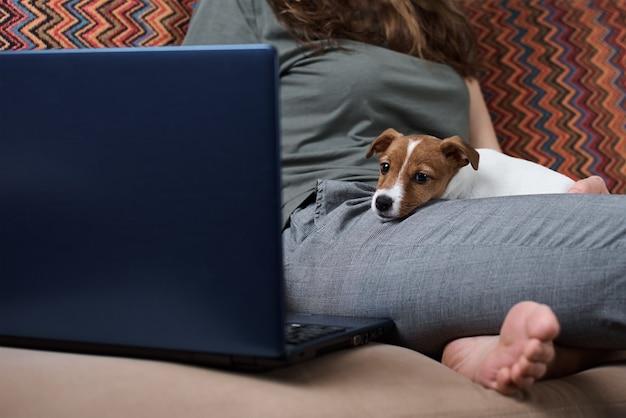 Frau, die auf laptop-computer und jack russell terrier hündchen auf sofa arbeitet. fernarbeit von zu hause aus konzept. gute beziehungen zu haustieren