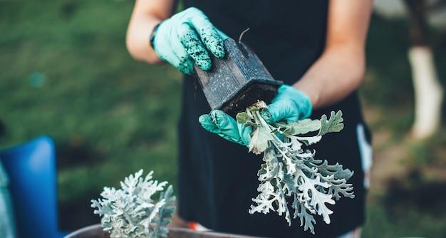 Frau, die blumen in töpfen zu hause neu pflanzt