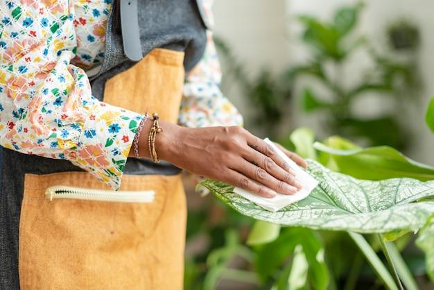 Frau, die das blatt der topfpflanze säubert