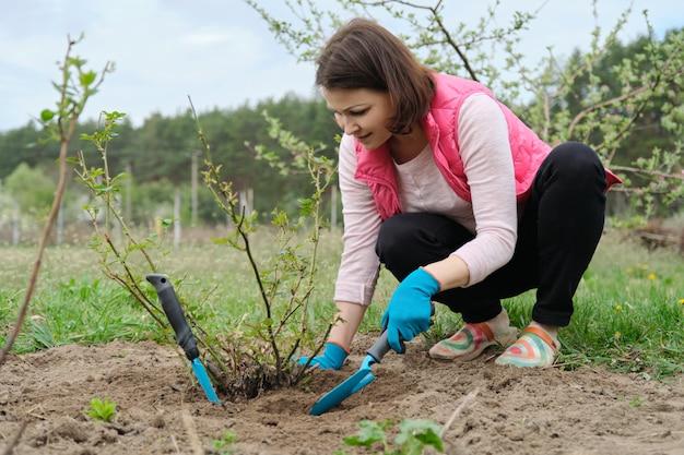 Frau, die den boden unter rosenbusch mit gartenwerkzeugen, frühlingsgartenarbeit bearbeitet