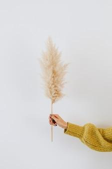 Frau, die ein getrocknetes pampasgras gegen eine weiße wand hält