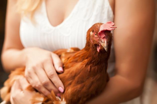 Frau, die ein huhn in einem hühnerhaus hält. nutztiere.