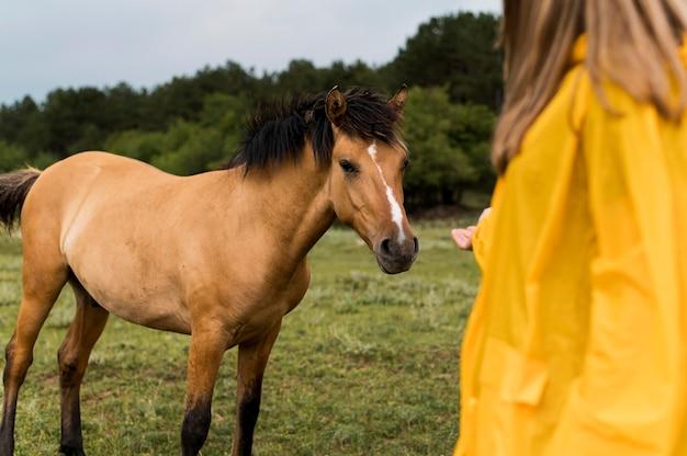 Frau, die ein pferd berühren will