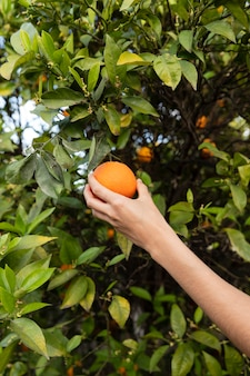 Frau, die eine orange in der hand hält