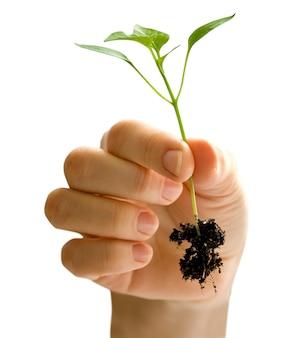 Frau, die eine pflanze zwischen den händen auf weiß hält