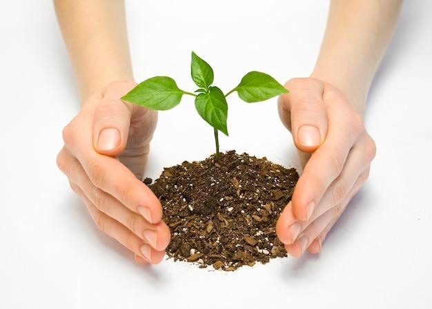 Frau, die eine pflanze zwischen den händen hält