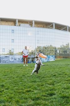 Frau, die einem kleinen lustigen hund orange flugscheibe wirft, der ihn auf grünem gras fängt. kleines jack russel terrier haustier, das draußen im park spielt. hund und besitzer im freien.