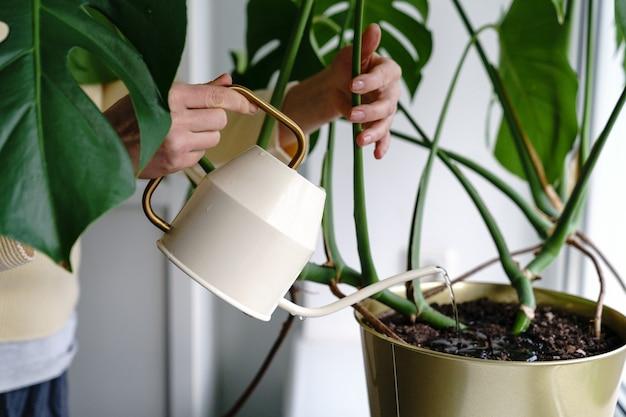 Frau, die eingetopfte monstera zimmerpflanze auf fensterbank im gewächshaus wässert. hobby, pflanzenpflegekonzept