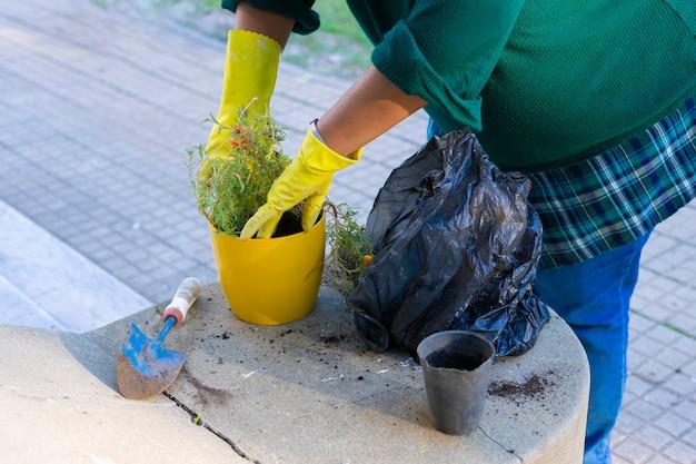 Frau, die handschuhe ohne sichtbares gesicht trägt, das eine blühende pflanze in einem topf in ihrem garten pflanzt