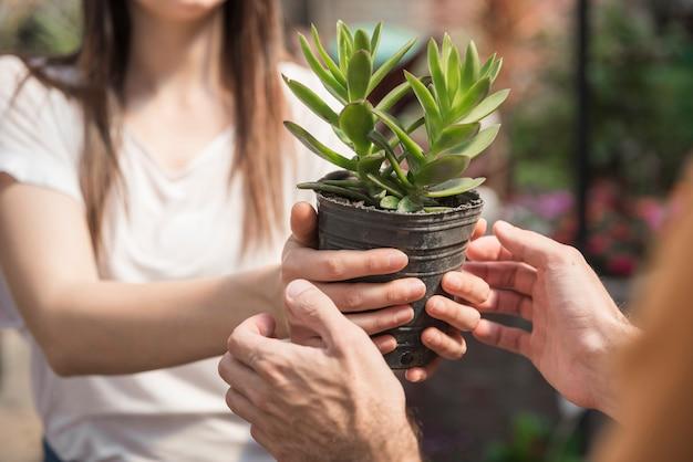 Frau, die ihrem kunden topfpflanze gibt