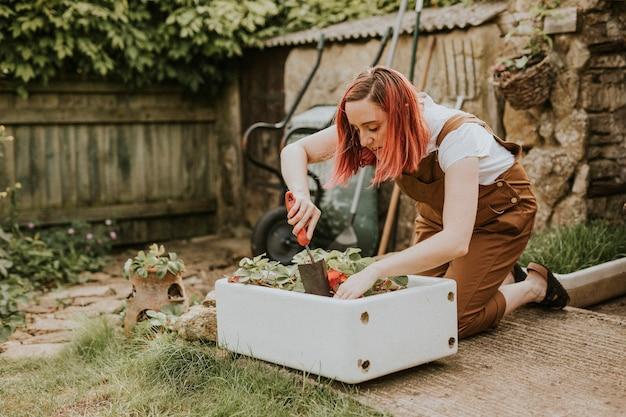 Frau, die im kleinen hausgarten pflanzt
