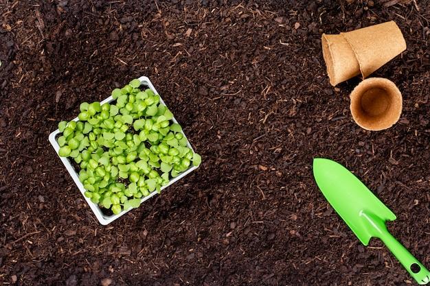 Frau, die junge sämlinge von kopfsalatsalat im gemüsegarten pflanzt.