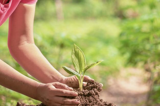 Frau, die jungen grünen sämling im boden gegen unscharfen hintergrund schützt