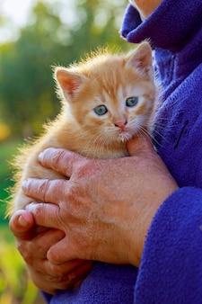 Frau, die kätzchen in ihren armen hält