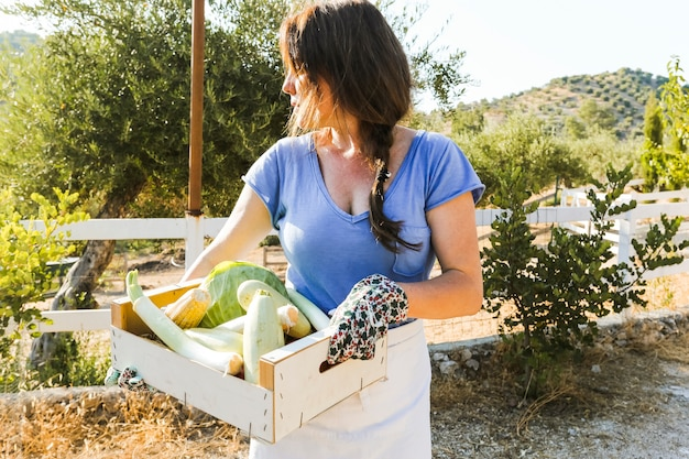 Frau, die kiste mit geerntetem gemüse auf dem gebiet hält