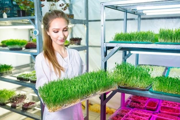 Frau, die mikrogrüns mit wasser besprüht. eine kleine mikro-grüne farm.